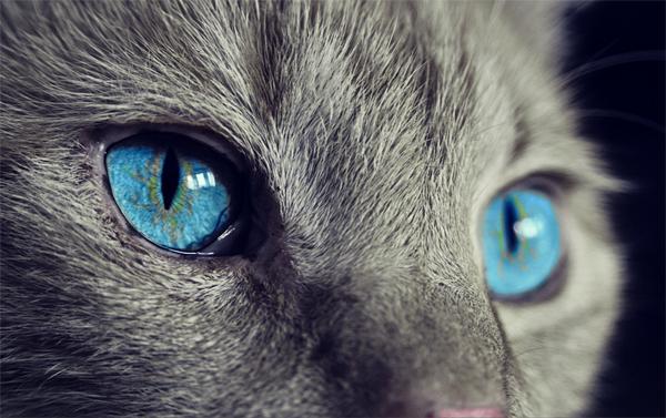 4 причины почему кошку рвет после еды непереваренной пищей