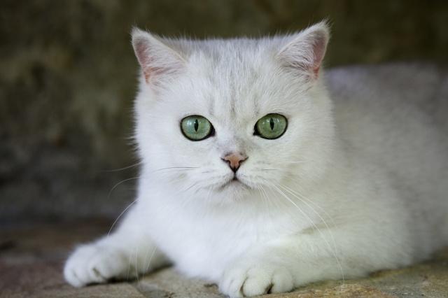 Простейшие у кошек - симптомы и лечение