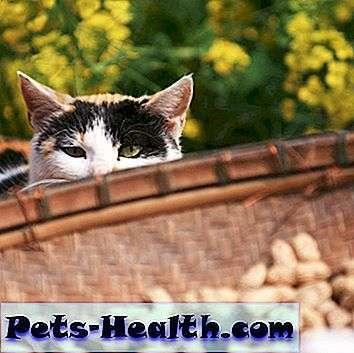 Орехи кошке - можно давать или нет