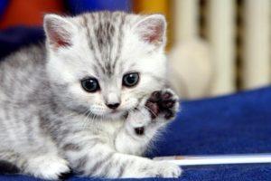 Как вывести блох у котенка - способы выведения паразитов