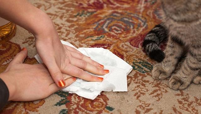 Как избавиться от запаха кошачьей мочи в квартире?