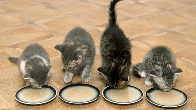 Можно ли давать кошкам гречку
