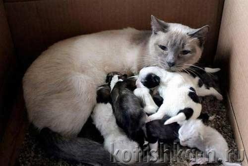 Новорожденный котенок не присасывается - причины и что делать