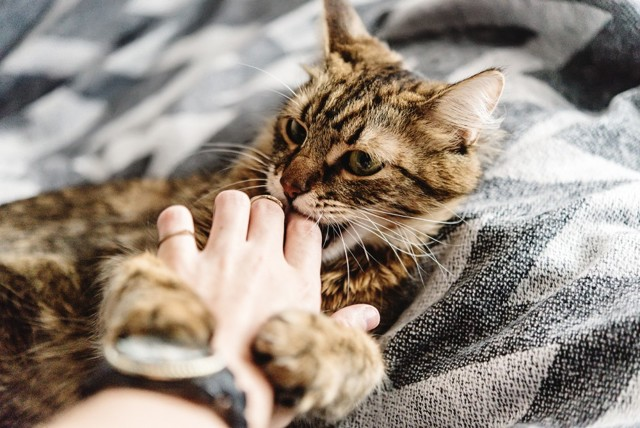 Какие антибиотики принимать при укусе кошки