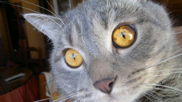 4 причины появления пятна на глазу у кошки - виды и лечение