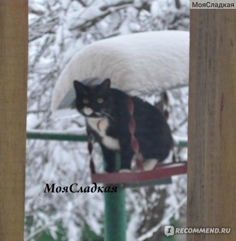 Можно ли капать Альбуцид кошкам в глаза
