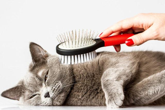 5 причин почему кошку вырвало кормом - что делать