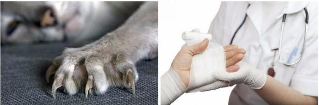 Укусила кошка и опух палец - что делать?