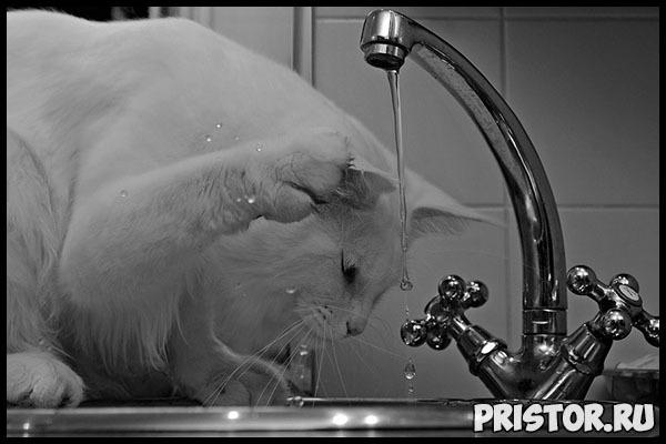 Сколько воды должна пить кошка - норма выпиваемой воды