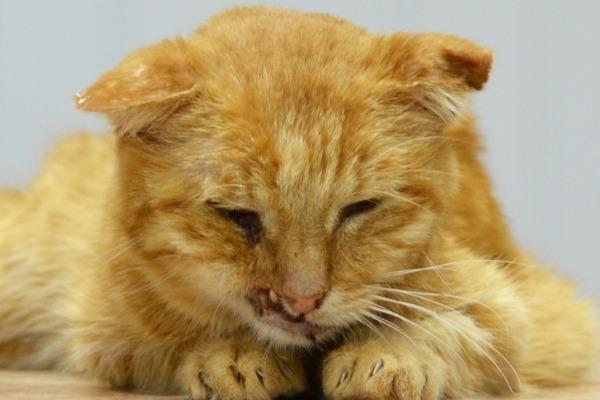 Почему кошки часто умываются - причины