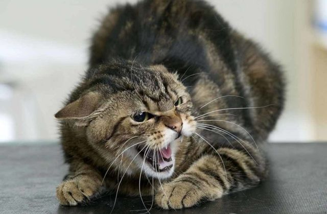 Почему нельзя целовать кошек - заболевание которыми можно заразится