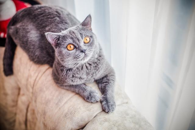 13 причин почему у кошки перхоть - лечение