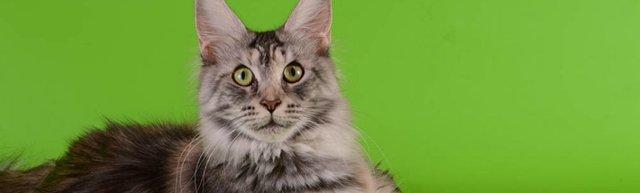 16 причин почему кот какает с кровью - лечение и диагностика