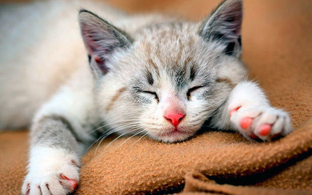 Сколько должнны спать котята