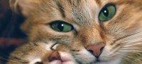Почему кошка ездит на попе - причины, как помочь?