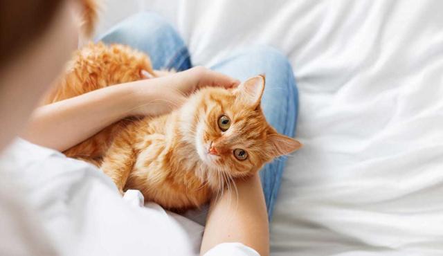 4 причины почему кошки мнут лапами человека - что это значит
