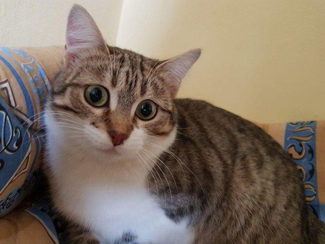 Грыжа у котенка - виды, причины, лечение