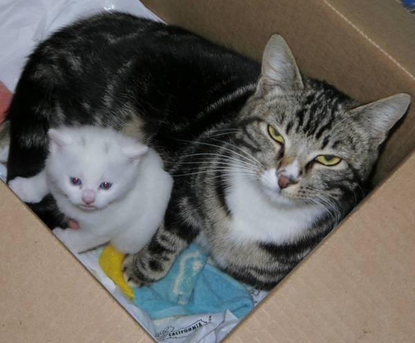 5 причин преждевременных родов у кошки - симптомы и что делать