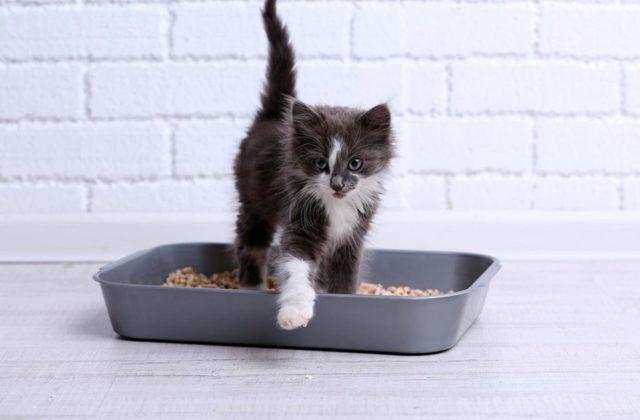 Понос у кошки - причины, лечение, профилактика