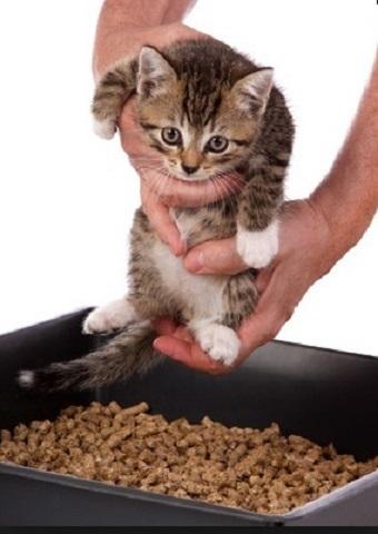 Сколько раз в день должен писать котенок?