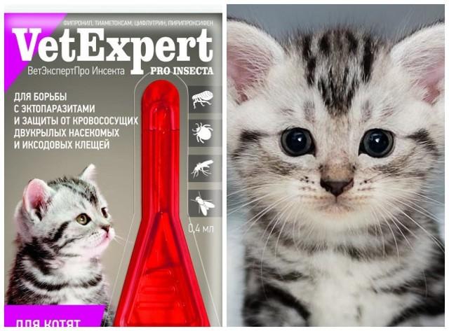 Капли на холку от блох и клещей для кошек - как капать?