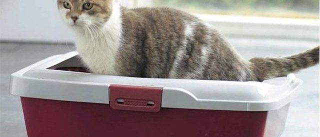 Слизь в кале у котенка - причины и лечение