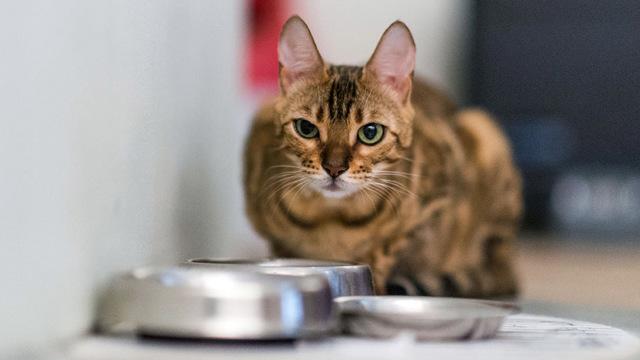 Натрия хлорид для кошек: инструкция по применению