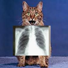 У кошки синий язык - причины и что делать