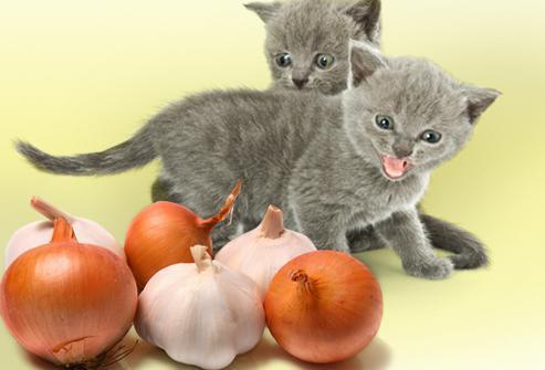 Какой запах не любят кошки, чтобы не гадили