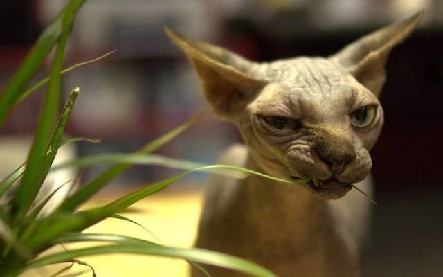 Есть ли у котов молочные зубы - смена зубов
