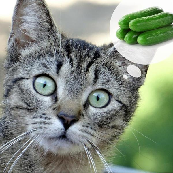 Почему котенок дрожит и трясется