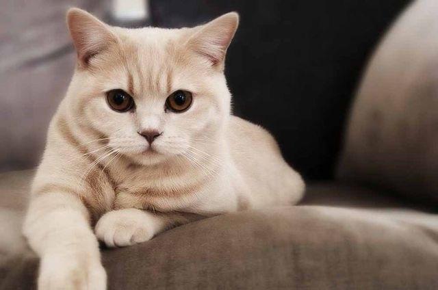 4 причины почему у кошки набухли соски - как лечить
