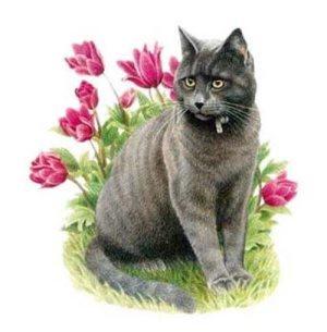 Аспаркам для кошек - дозировка, как принимать