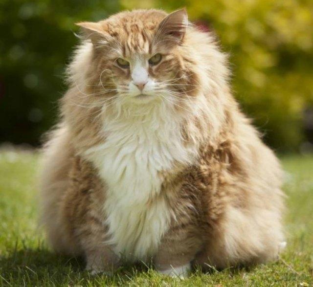 6 причин почему кот не толстеет - что делать