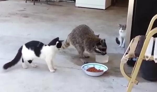 Инкубационный период бешенства у кошек - формы бешенства