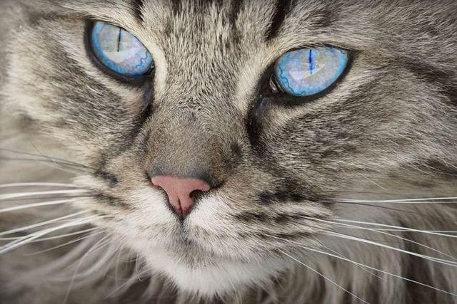 Какой нос должен быть у здорового котенка