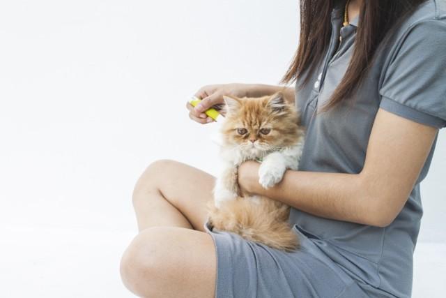 Как проверить аллергию на кошек - аллерготест