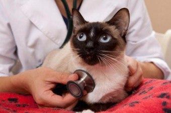 У кота течет из носа вода - причины и лечение