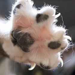 5 причин странного поведения кошки