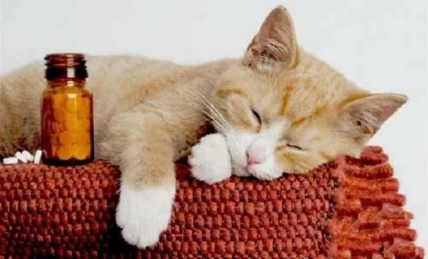Дицинон для кошек: инструкция по применению