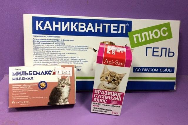 Празиквантел для кошек - инструкция по применению, дозировка