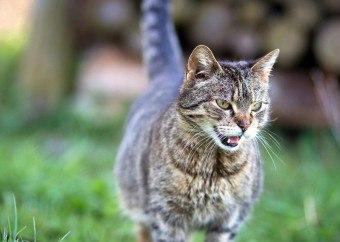 Корвалол кошке: можно давать или нет