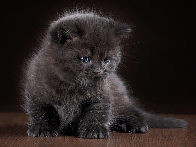 Как красиво назвать серого котенка мальчика