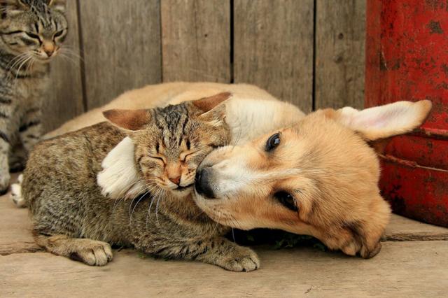Как подружить кошку с щенком?