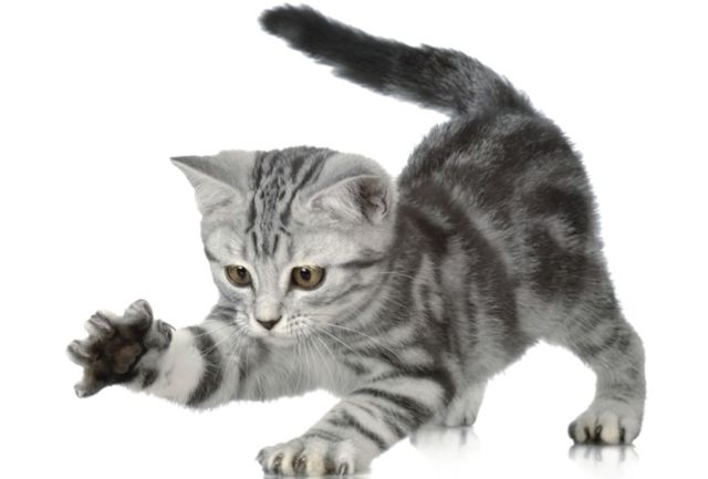 Средний вес кота - сколько должен весить кот