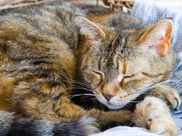 Лечение простуды у кота