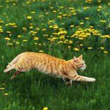 Когда можно удалять когти котенку?