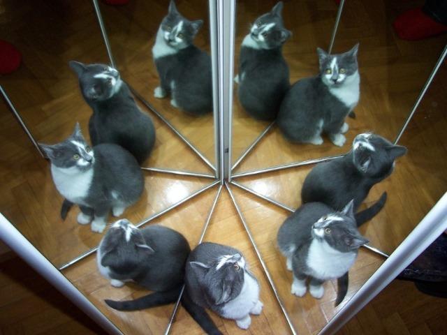 У кошек 9 жизней - почему так говорят?