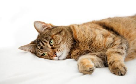 4 причины зеленой рвоты у кошки - симптомы и лечение