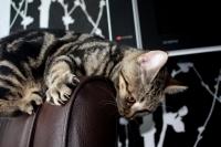 Как отучить кота драть мебель - рекомендации специалистов